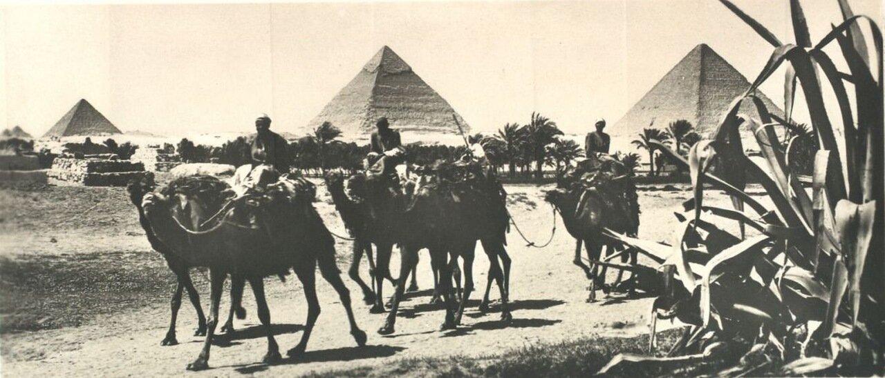 Гиза. Караван верблюдов на фоне пирамид. 1910
