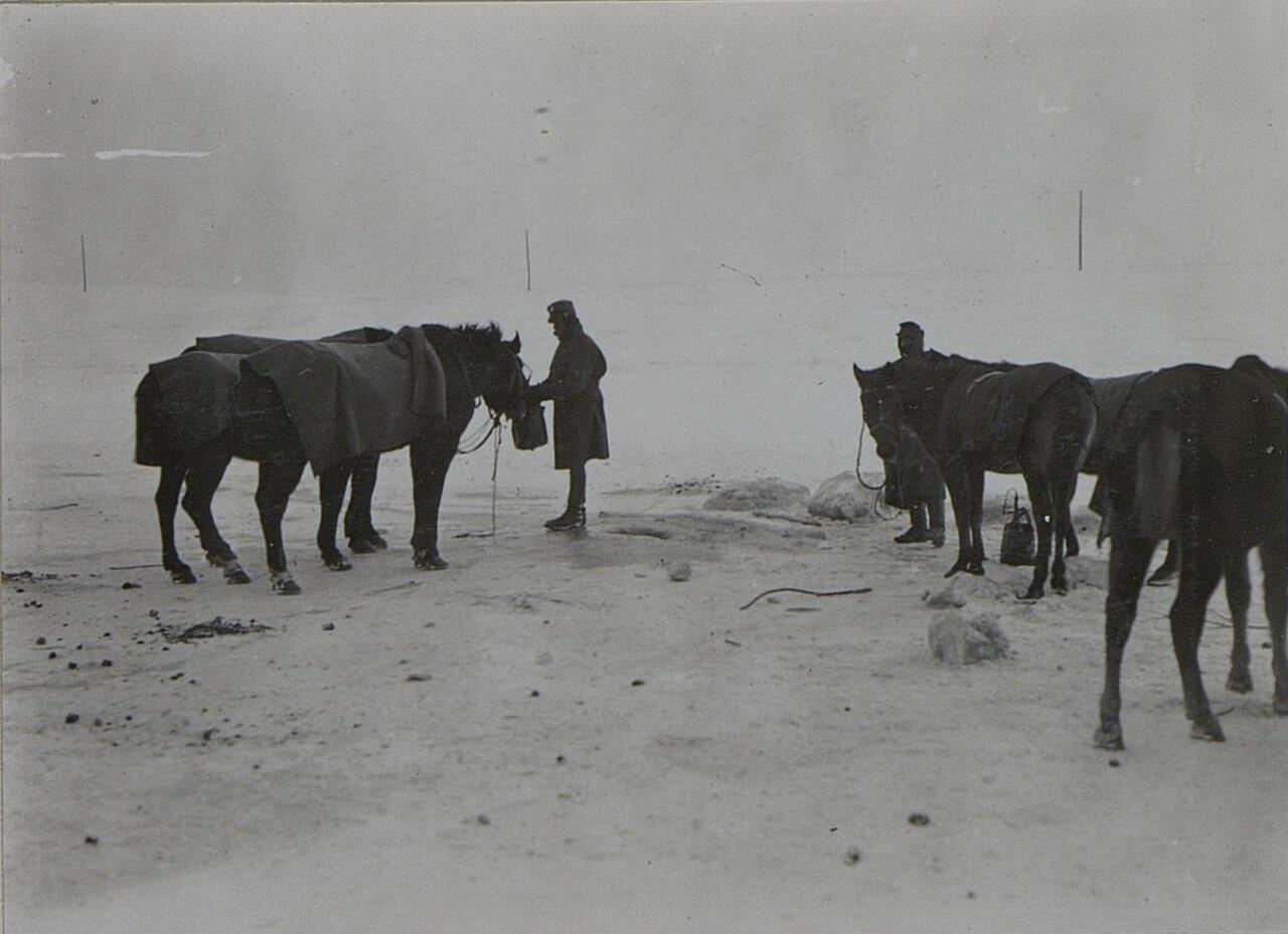 Павловичи. Лошади пьют из замерзшего водоема