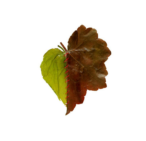 Frankenstein leaves, Gaëlle Villedary0.jpg