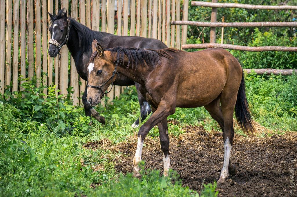 Златоуст. Конный клуб Мустанг, верховая езда на лошадях