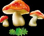 грибочки (11).png