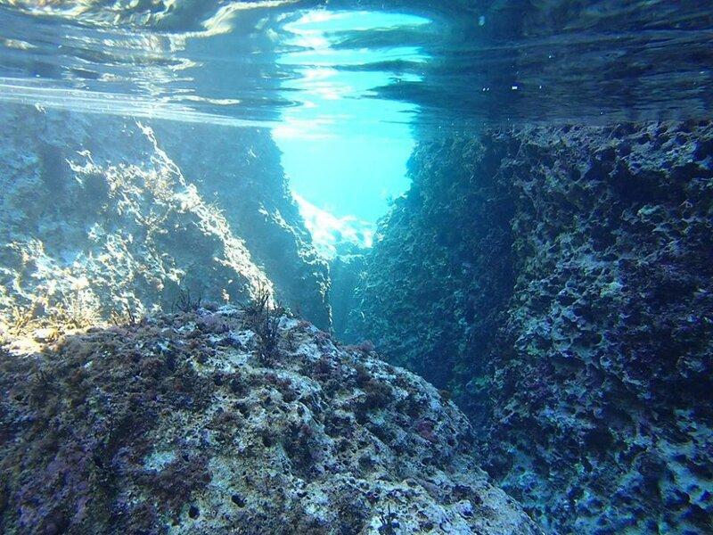 Подводный мир Адриатики5.jpg