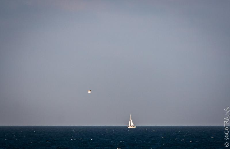 Яхта и птица