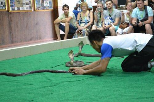 Шоу змей, Пхукет, Таиланд