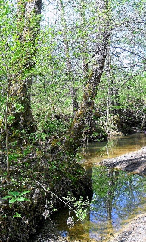 У реки, весной ... SAM_7676.JPG