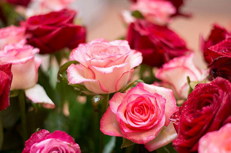 цветы мая розы