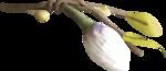NLD Paper flower.png