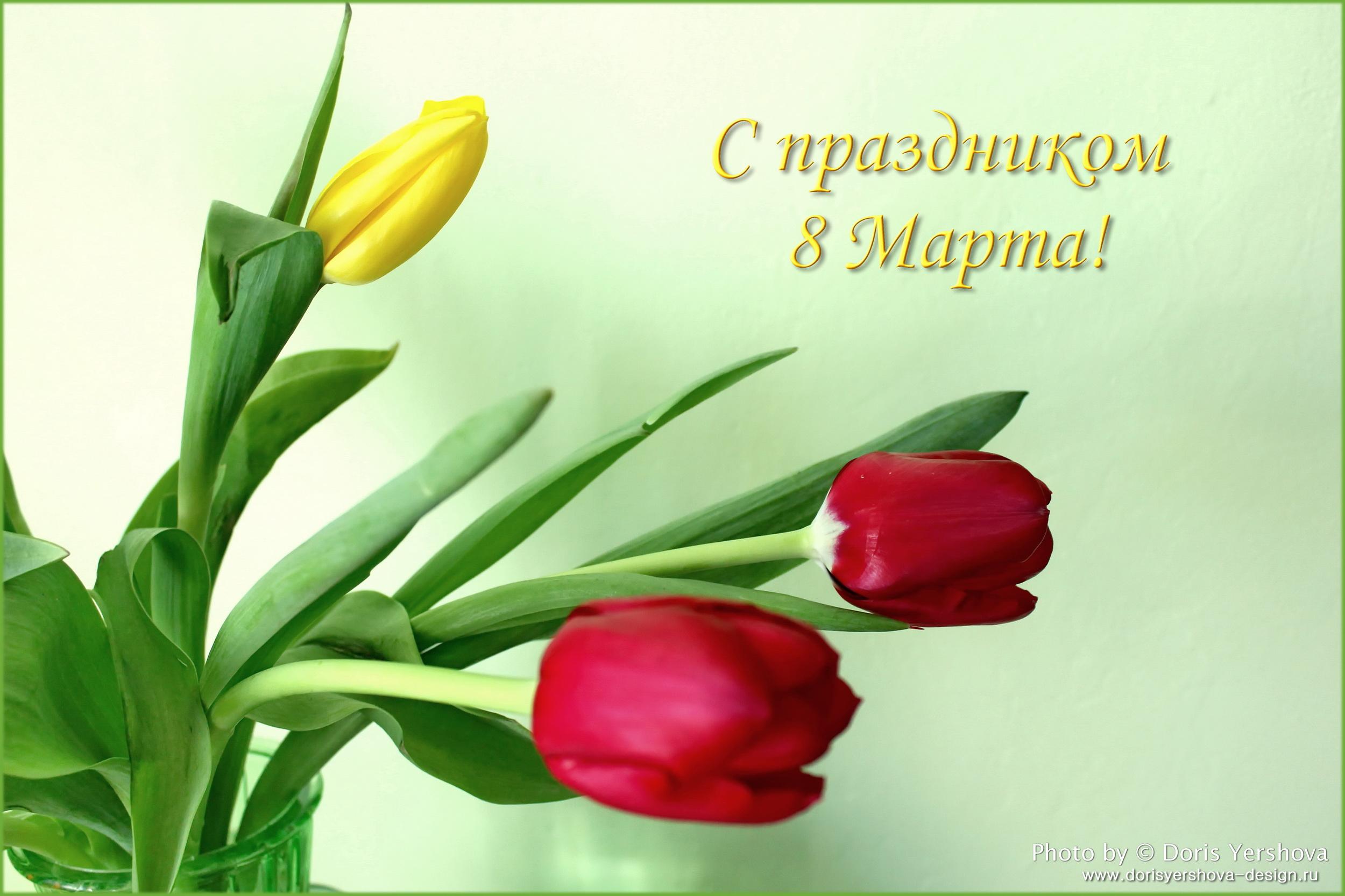 тюльпаны, фото Дорис Ершовой, с праздником 8 марта, цветы, весна, зеленый, желтый, бордо