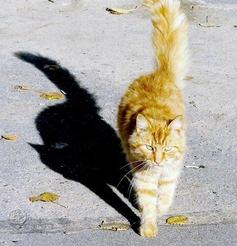 Грозный кот рыжий