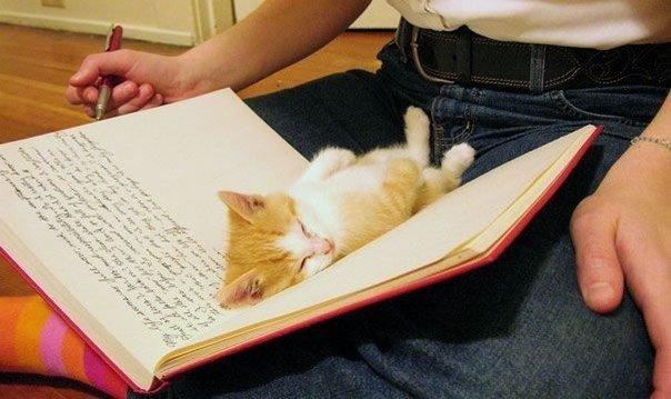коты мешают человеку читать