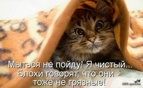 Сама по себе гулёна (о кошках) - Страница 2 0_1041fb_b9c9e7d3_L