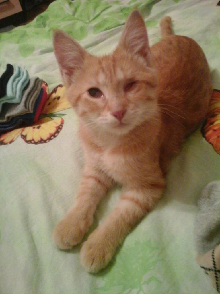 История одноглазого кота Джека