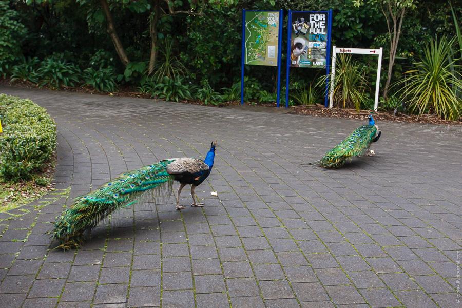 Зоопарк в городе Hamilton
