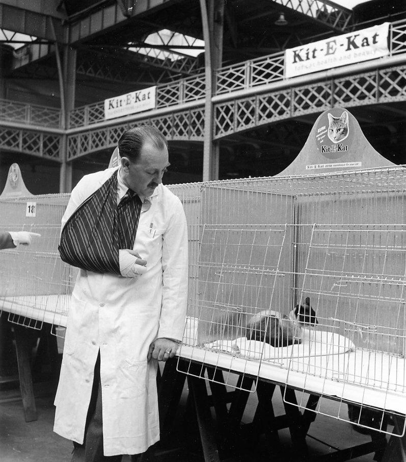 1950. Сиамские кошки в клетке, Лондон