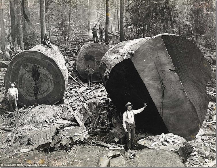 Lumberjacks-From-California-5_thumb.jpg