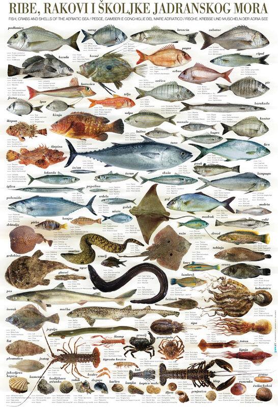 рыба с знаком в названии