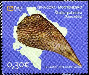 Skoljka-palastura---Pina-nobilis.jpg
