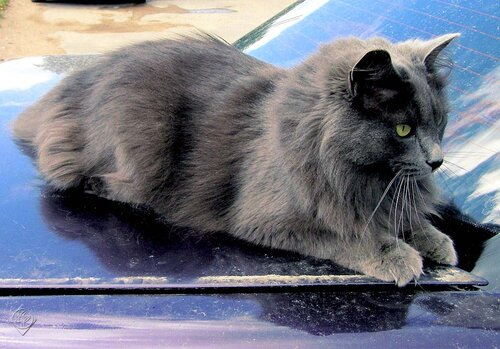 Из жизни серого кота