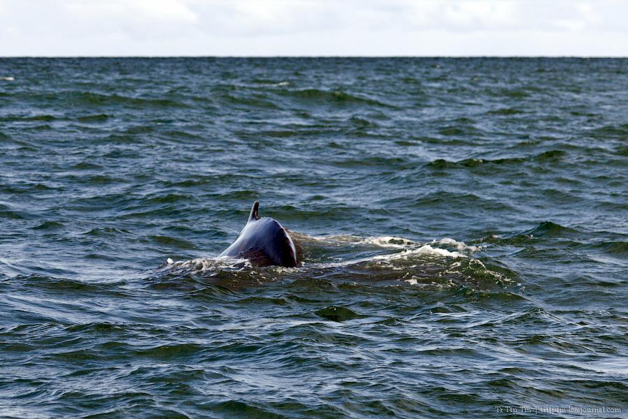 9. Дороги Нордюрланда и киты залива Скъяльфанди.