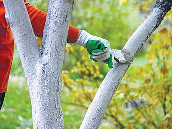 подготовка молодых деревьев к зиме