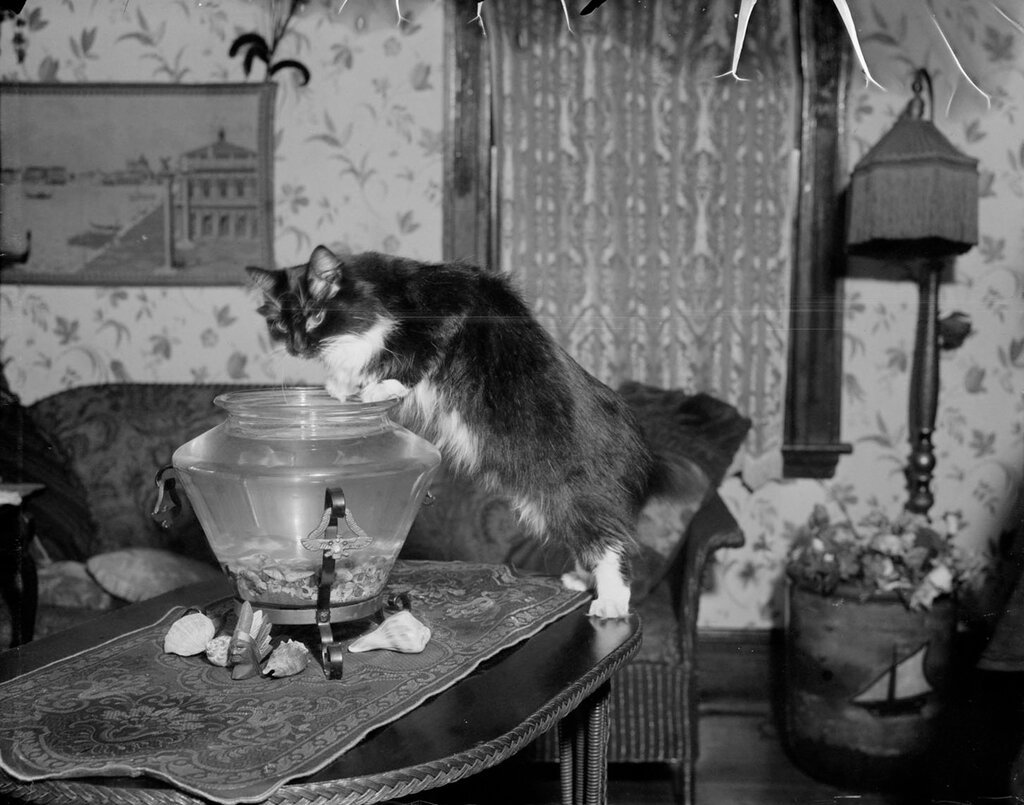 Cat in the fish bowl, 1930