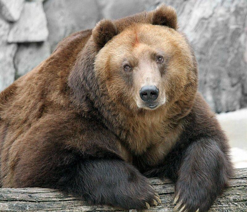 """...Есть созвездие """"Большая Медведица""""...-это Я!.."""