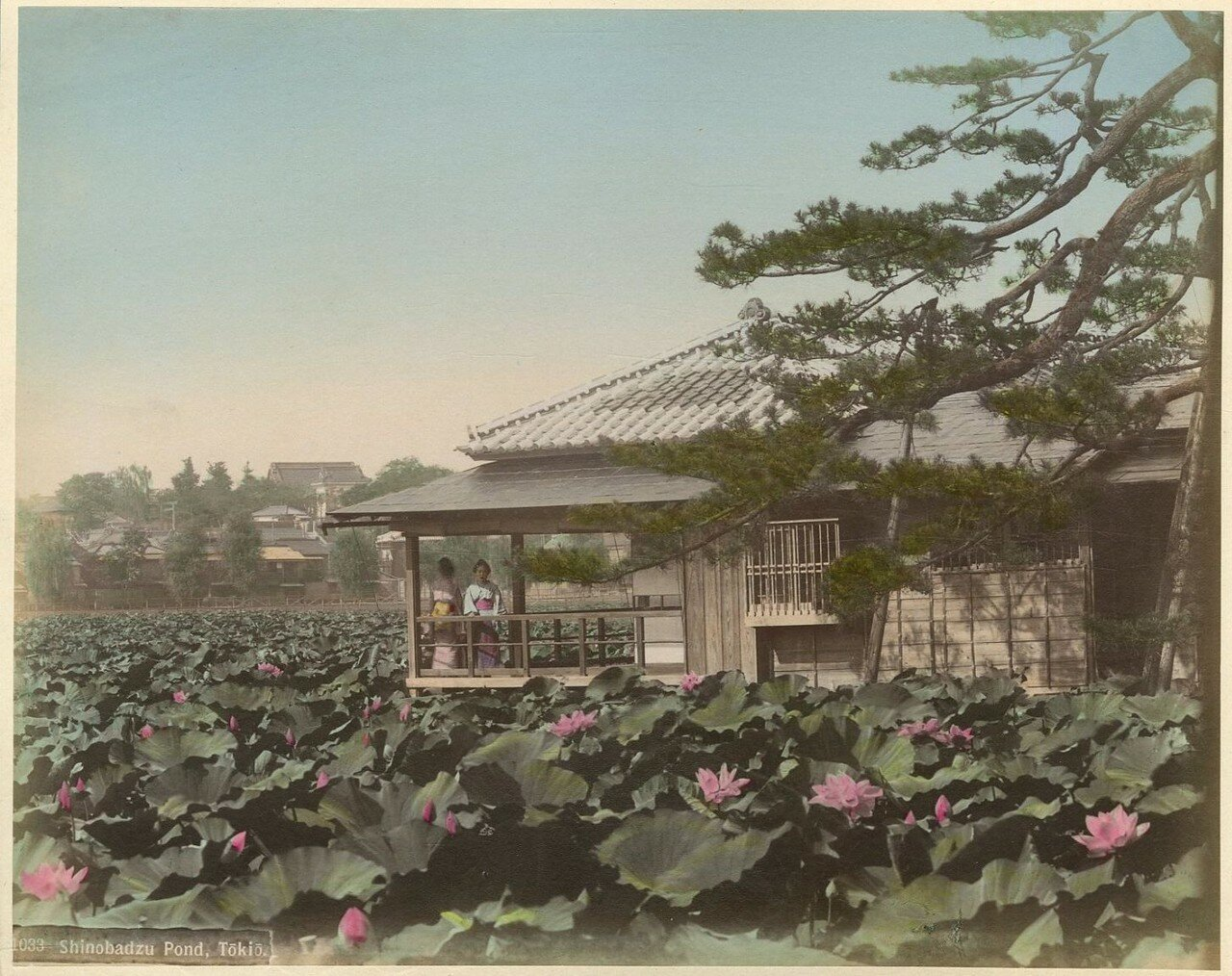 Токио.  Пруды Синобадзу