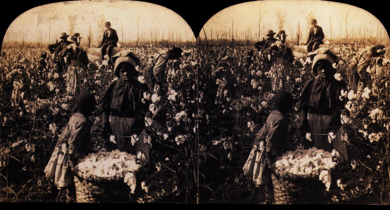 1880. Сбор хлопка в Миссисипи