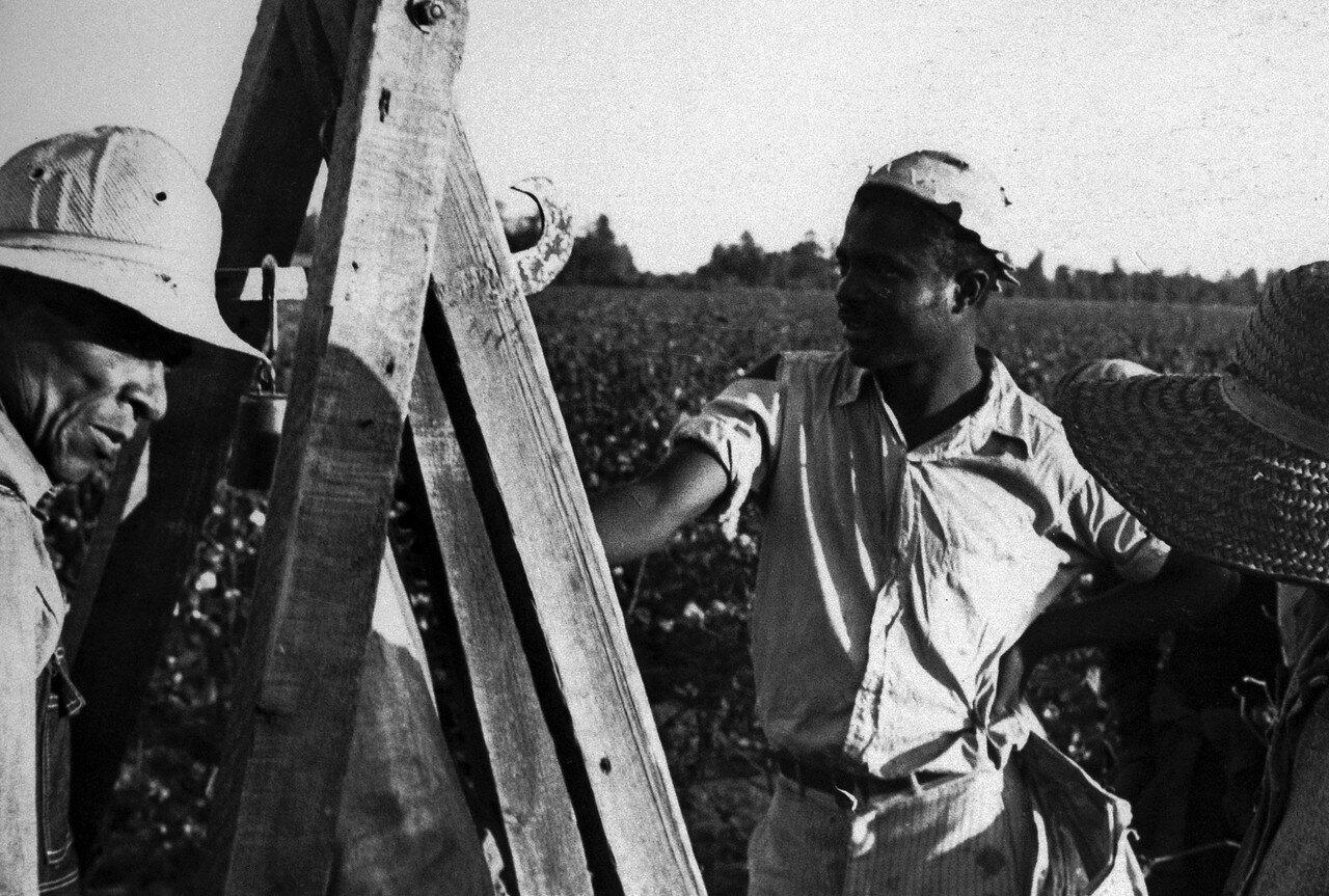 1935. Октябрь. Взвешивание хлопка, округ Пуласки, Арканзас