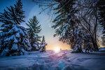 zima-sneg-derevya-eli-solnce.jpg