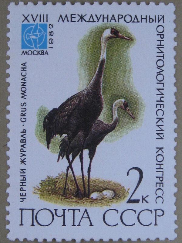 Черный журавль (Grus monacha).