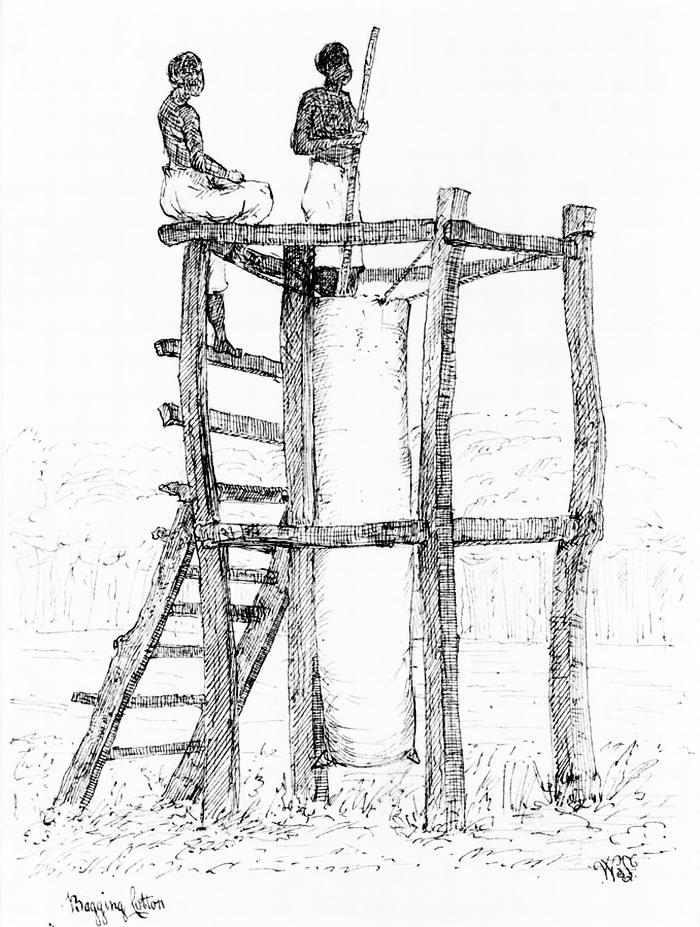 Рабы - сборщики хлопка (Ямайка, 1815 год)