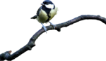 mzimm_snow_wonder_bird_on_branch.png