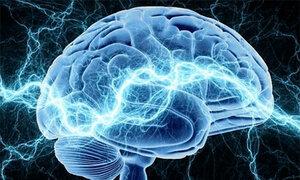 Из-за чувства страха в мозгу образуются новые пути