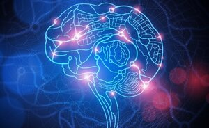 Ученые нашли новые отличия между мозгом мужчин и женщин
