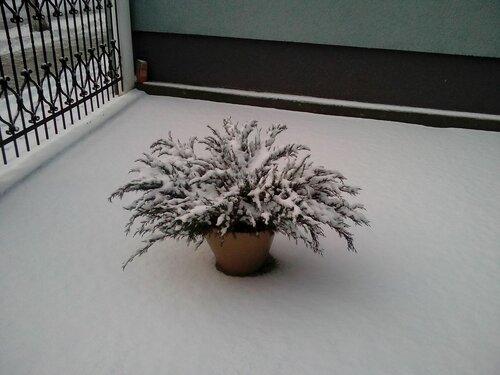 28-12-2014. Советск. Снег. Зима