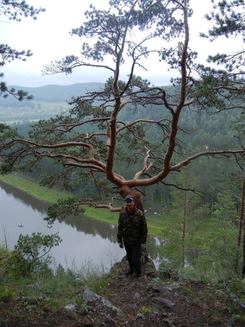 Знаменитое дерево - кресло Юрина (18.08.2015)