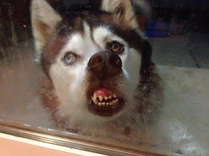 100 фотографий смешных и забавных собак