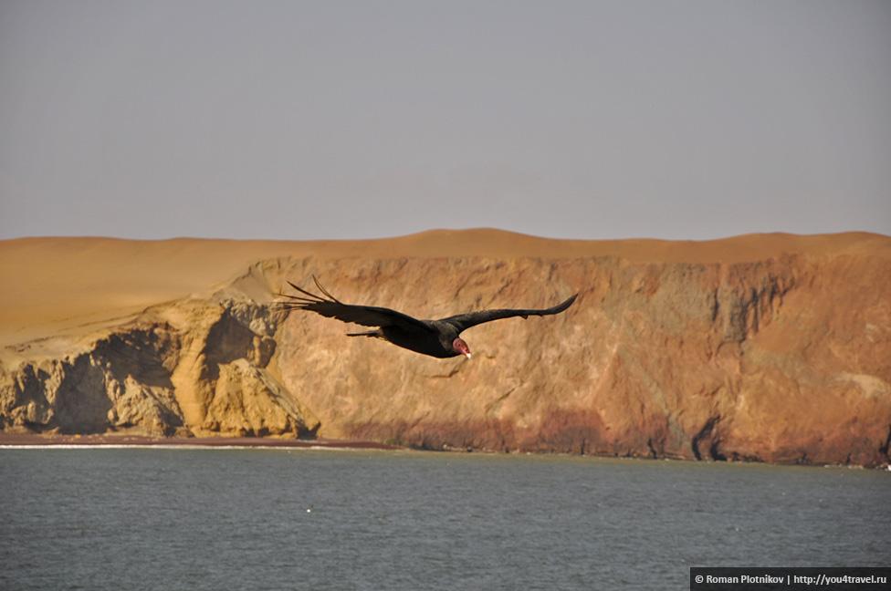0 16173c e0eb2369 orig Национальный парк Паракас и острова Бальестас в Перу