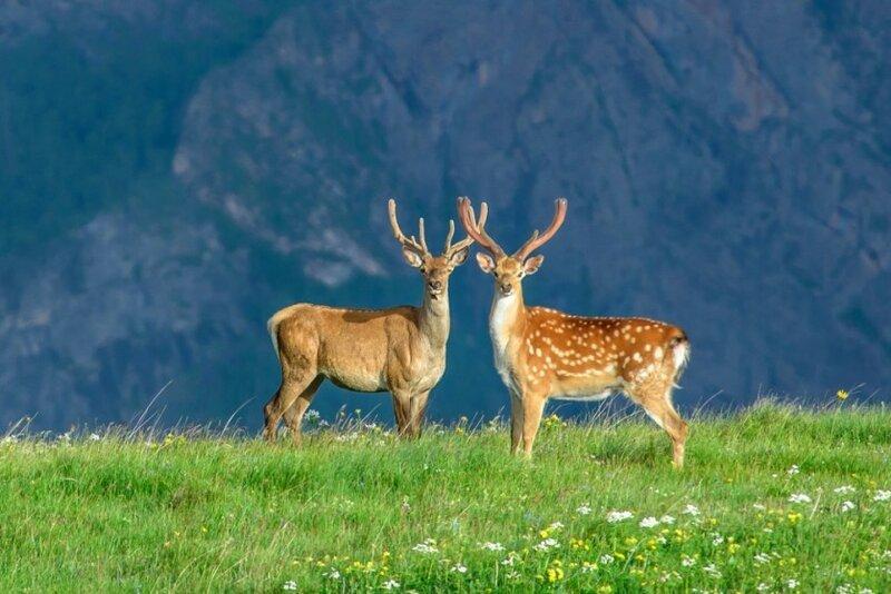 Непостижимая красота дикой природы России. Фотоконкурс National Geographic 0 1b379e d3b3359f XL