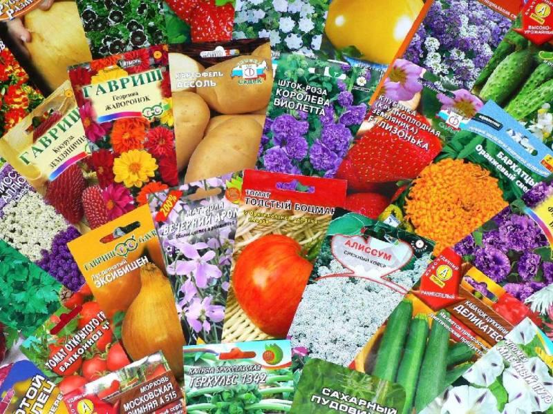 выбор семян для посева
