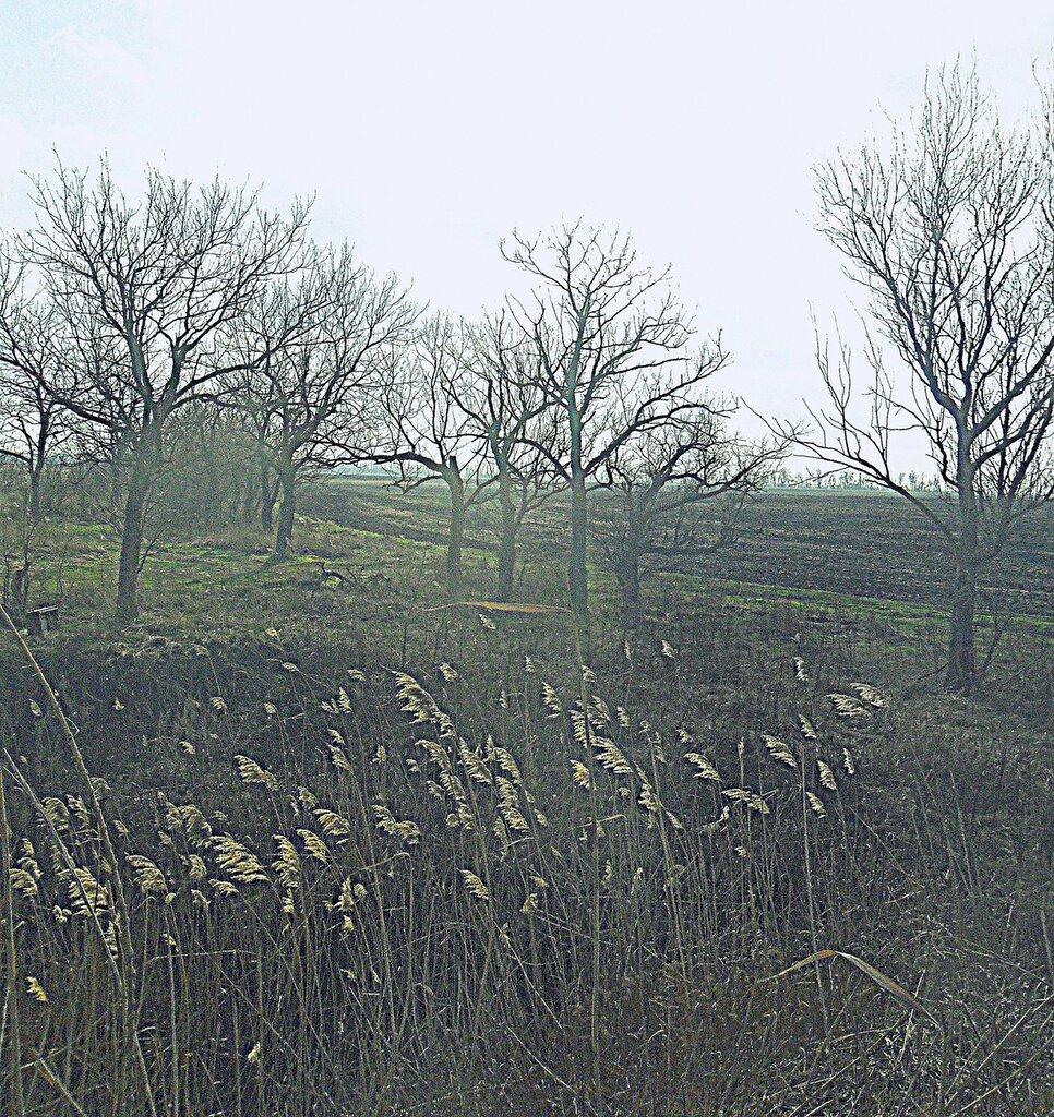 У поля, февраль... SAM_5435.JPG