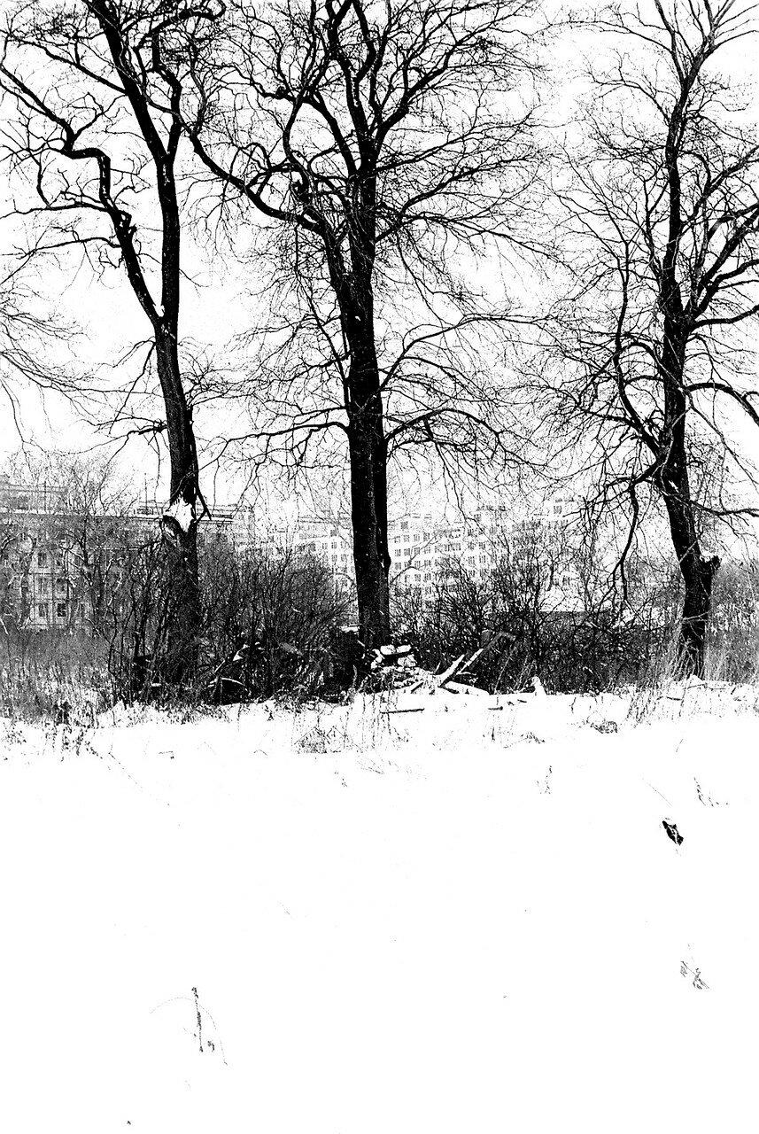 1981. Коломенский пейзаж. Три липы