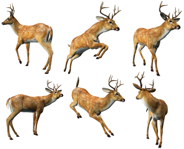 3D_Deers_Collection_PNG_Clipart.png