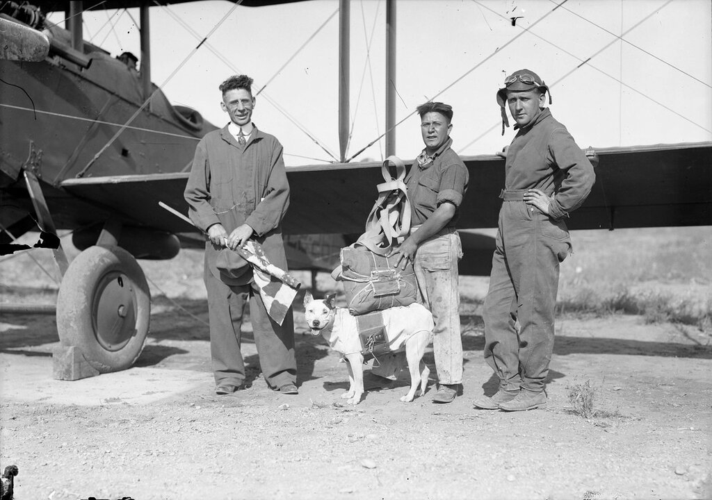 Jeff, the mascot of the 120th observation squadron of the Colorado Air National Guard, shown wearing his parachute, between 1920 and 1924. He made several successful parachute jumps before he was killed on Aug. 16, 1924 when his chute failed to open