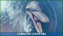Дельфины - Шпион в стае / Dolphins - Spy In The Pod (2014) HDTVRip 720p