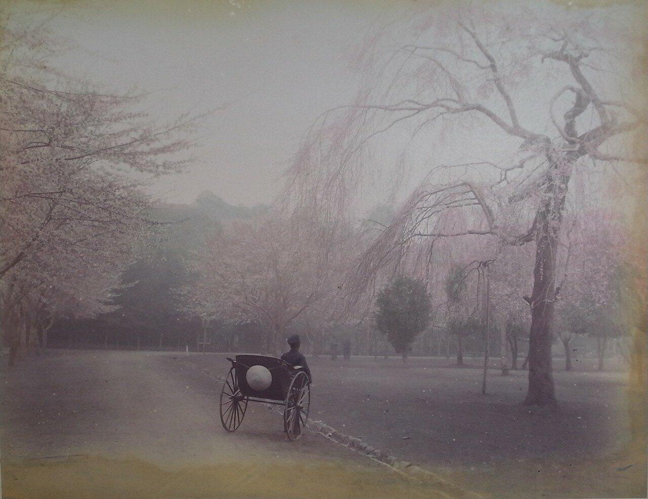 Рикша в парке Уэно