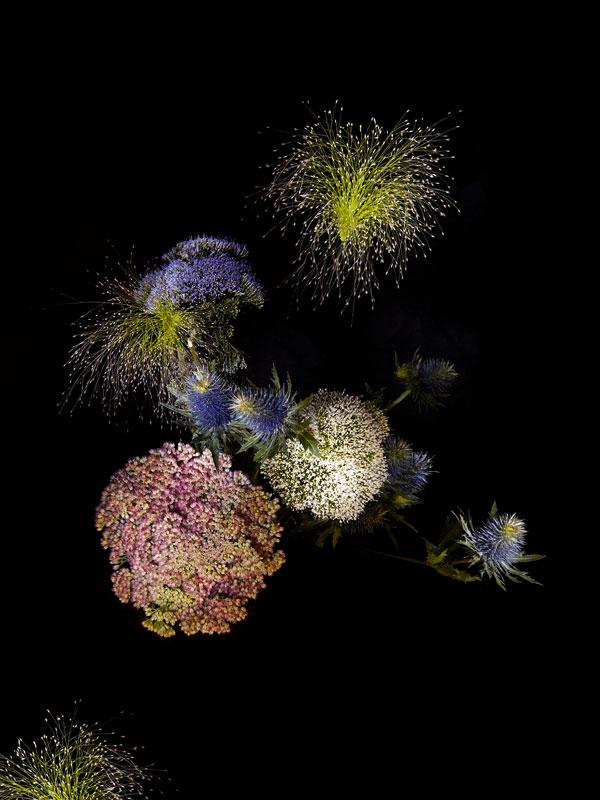Flowerworks, Sarah Illenberger80.jpg