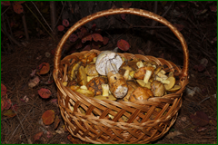 http://img-fotki.yandex.ru/get/15592/15842935.211/0_da6f0_b5a15c3e_orig.png