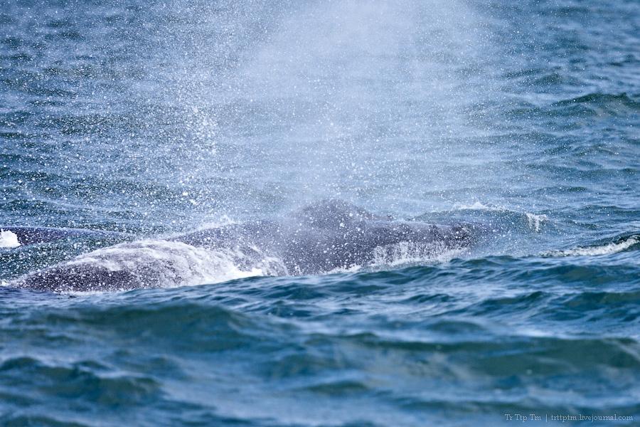 5. Дороги Нордюрланда и киты залива Скъяльфанди.